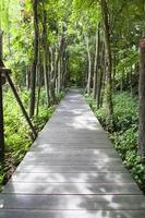 Holzsteg im Park