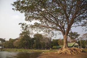 großer Baum in der Nähe des Wassers in Thailand foto