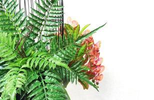 Pflanzen im Vogelkäfig