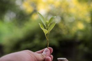 junge Pflanze in der Hand halten foto