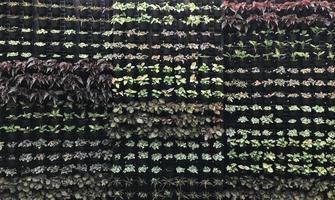 Wand aus Topfpflanzen