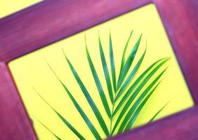 grünes Blatt durch Bilderrahmen