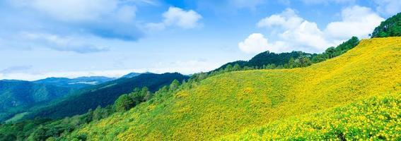 Landschaft in Thailand mit gelben Blumen foto