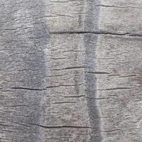 Rinde eines Kokosnussbaumes foto