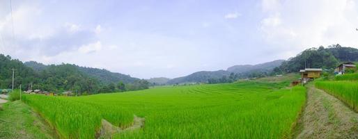 Reisfelder in den Bergen in Thailand foto