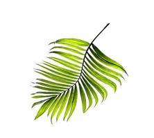einzelnes grünes Blatt