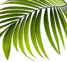 Nahaufnahme eines tropischen Blattes