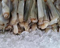 Rasiermessermuscheln auf Eis foto