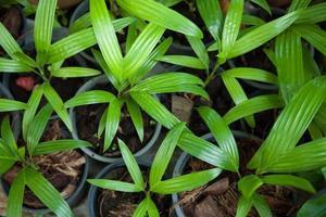 kleine Pflanzen in Töpfen foto