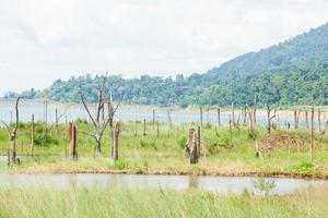 tote Bäume im Wasser