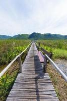 Holzweg im Sumpf