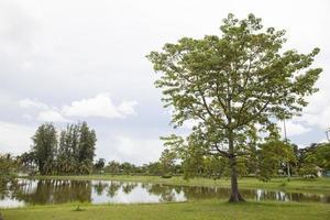 Baum auf dem Rasen foto