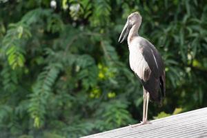 großer Vogel auf dem Dach foto