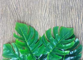 grüne tropische Blätter auf Holz foto
