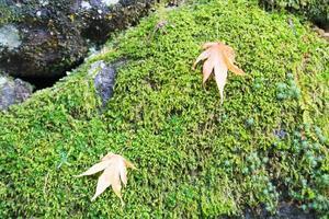 Blätter auf einem Felsen foto