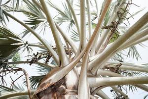 Zweige eines Baumes foto