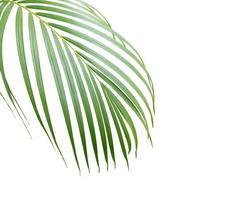 üppiges tropisches Blatt mit Kopierraum foto
