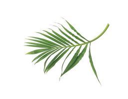 üppig grüne Blätter auf einem Ast foto