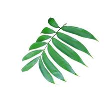üppiger grüner Blattzweig