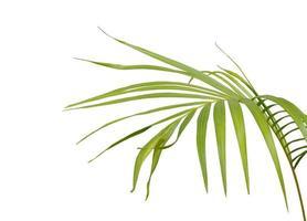 tropisches hellgrünes Blatt foto