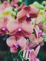 rote Orchideen in einem Geschäft foto