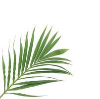 isolierter Zweig von Blättern mit Kopierraum foto