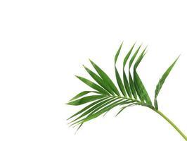 tiefgrüner Zweig mit Kopierraum foto