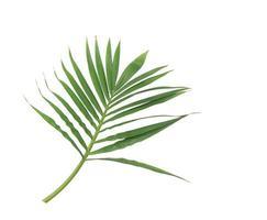 üppiger tiefgrüner Zweig von Blättern foto