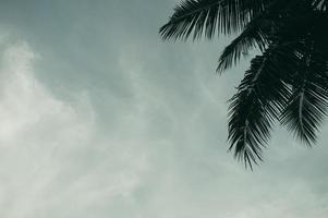 Kokosnussbaumgärten in Thailand