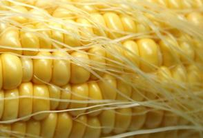 Mais und Seide