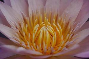 zarte rosa Blume