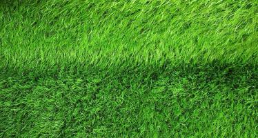 üppiges grünes Gras