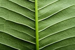 Nahaufnahme des grünen Blattes foto