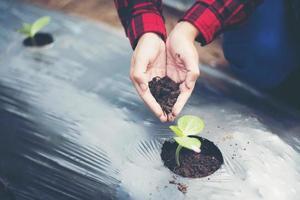 Hand der jungen Frau, die einen jungen Baum auf schwarzem Boden pflanzt foto