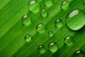viele Wassertropfen auf Bananenblättern foto
