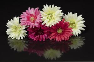 weiße und rosa Dekorationsblume auf einem schwarzen Hintergrund