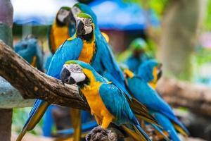 Gruppe von Ara Papageien foto