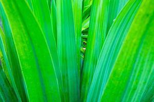 Nahaufnahme von grünen Blättern draußen