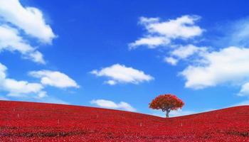 bunte rote Blätter und Baumlandschaft auf blauem Himmel