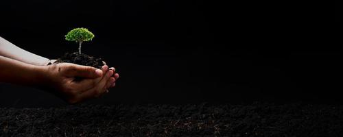 Person, die einen kleinen Baum auf schwarzem Hintergrund hält