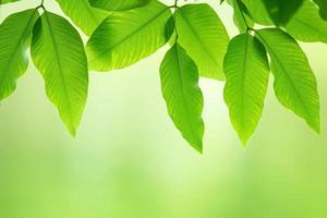 frische grüne Blätter foto