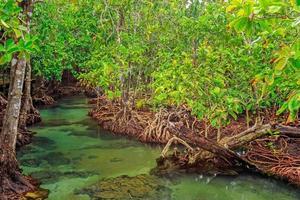 Mangrovenbäume in einem Torfsumpfwald am Pom-Kanal-Bereich, Provinz Krabi, Thailand. srgb Farbprofil foto