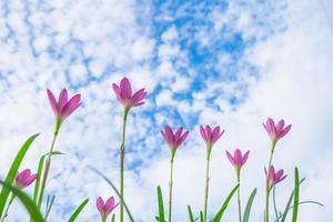 Himmelhintergrund mit rosa Blumen foto