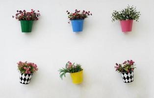 Pflanzen an einer Wand foto