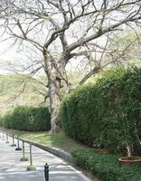 Baum in der Nähe von Hecke foto