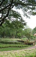 Baum in einem Garten foto