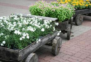 Holzwagen mit Blumen foto