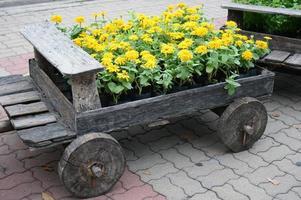 gelbe Blumen im Holzwagen foto