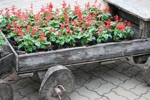 rote Blumen in einem Wagen foto