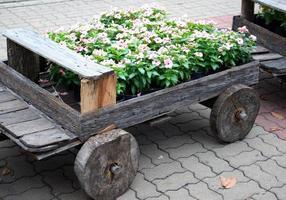 Blumen in einem Wagen foto